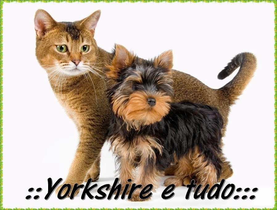 imagens para colorir de yorkshire - Desenho de Yorkshire Terrier para colorir Desenhos para