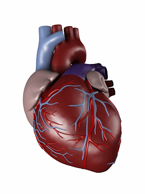 Murmurs in the heart: What are they and what are the symptoms?