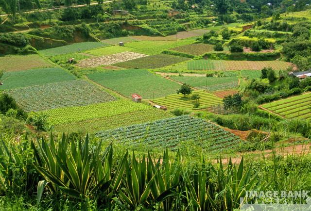 Recurso natural renovable y no renovable biologia general for Que es la asociacion de cultivos