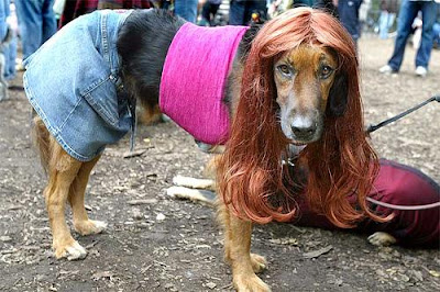 Mulher é condenada por 'homenagear' cadela com o nome da vizinha