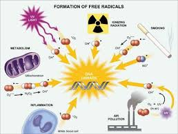 Pengertian Antioksidan - echotuts