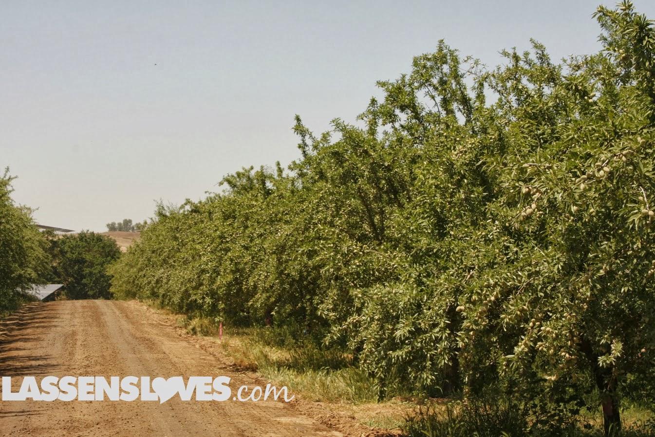 lassensloves.com, Lassen's, Lassens, organic+produce, almond+trees, why+eat+organic