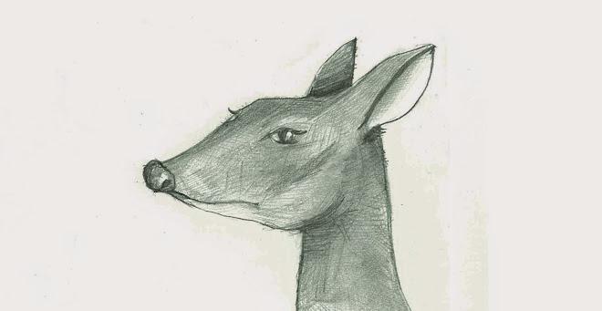 ahhim ‧  Barking deer daily