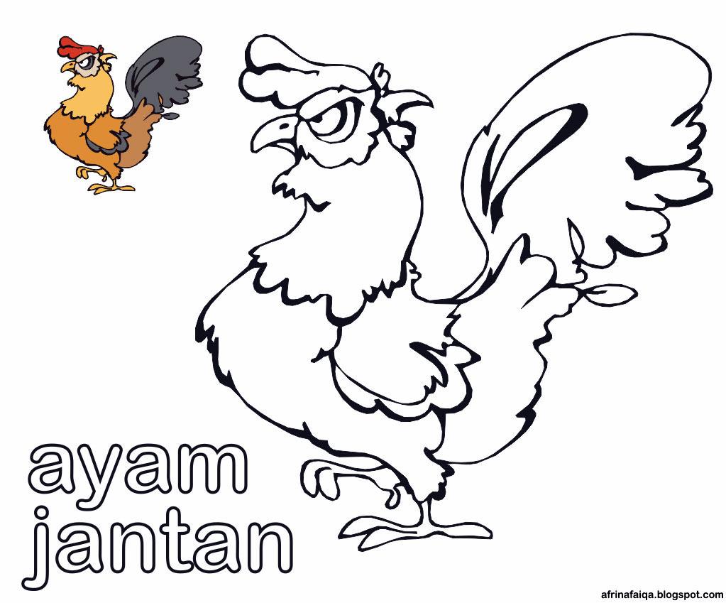 Mewarnai Gambar Ayam Jantan