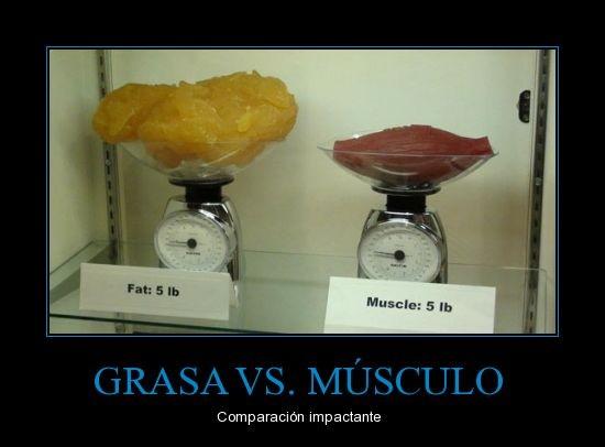 como perder grasa del abdomen sin perder musculo