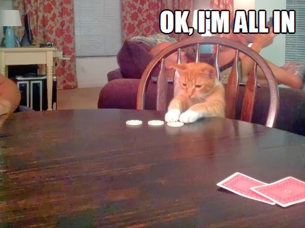 30 Funny animal captions - part 18 (30 pics), funny gambling cat meme, ok i'm all in