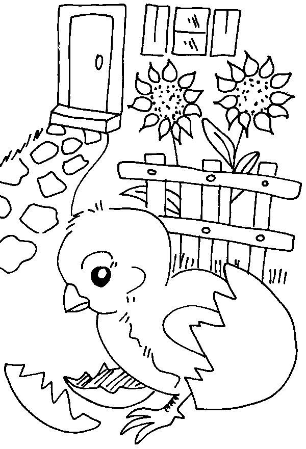 Desenhos Para Colori Pintinhos Fofos desenhar