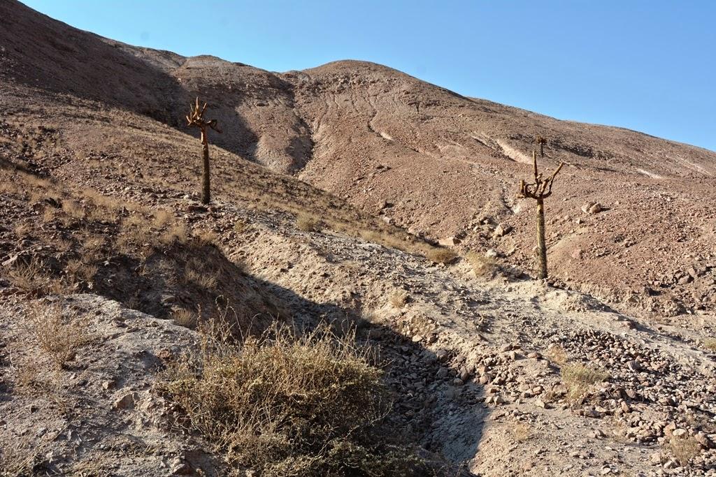 Candelabro desert
