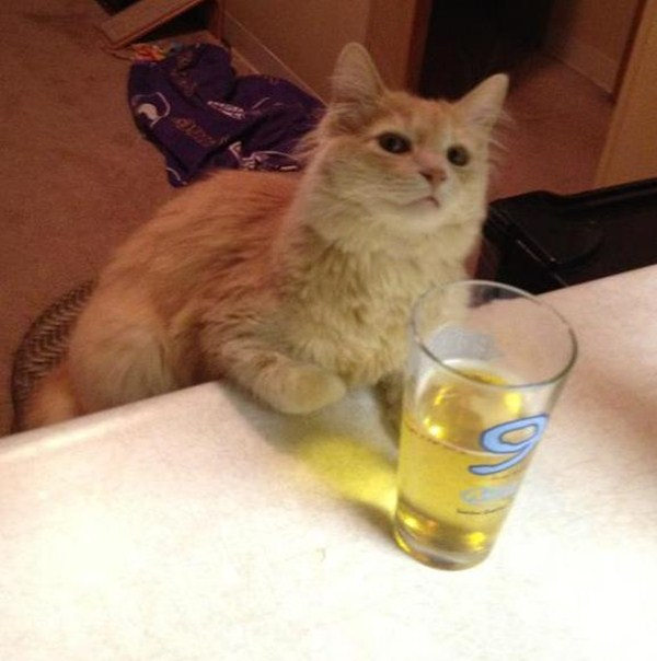 cat pictures, cat photos, cat and beer