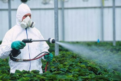 6 Fatos que nos Escondem sobre os Pesticidas