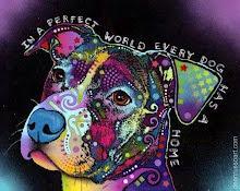 En un mundo perfecto cada perro tiene una casa.