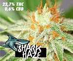 Semillas Marihuana SHARK HAZE de PURE SEEDS