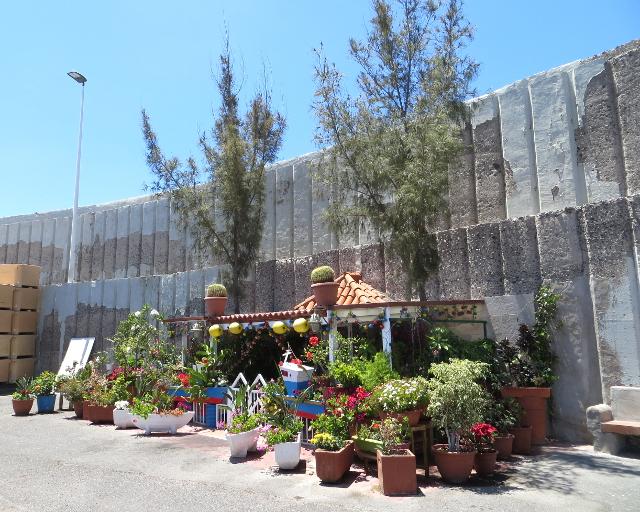 arguineguin gran canaria flower shop