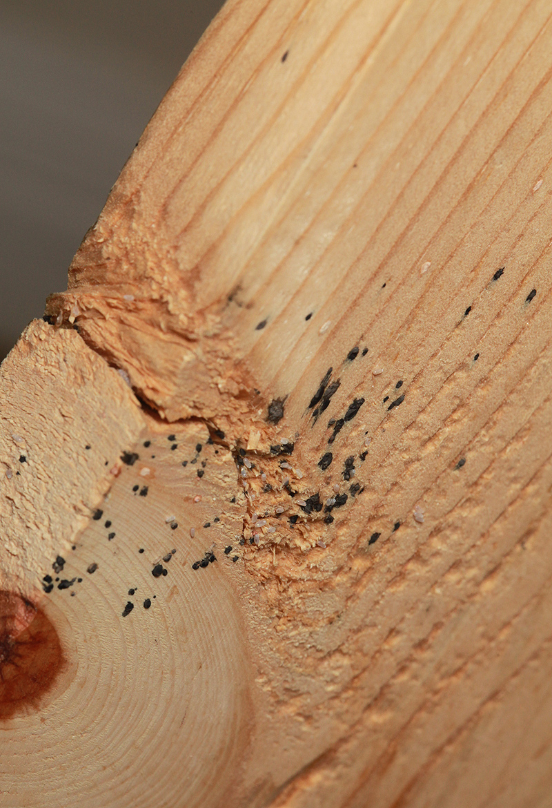 Bed Bugs And Wood Floors