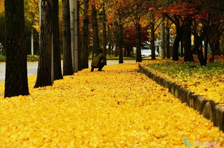 The path filled with golden leaves