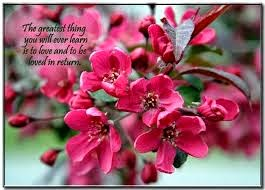 Nice flower quotes