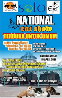 Solo National Cat Show, Surabaya National Catshow, 10 Juli 2011, 24 April 2011, 18 April 2011,Pedigree ICA, non pedigree, kontes kucing,  cat show