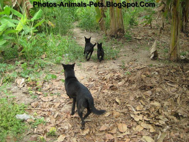 http://4.bp.blogspot.com/-BjmtEPyJACo/ThiMk4R6esI/AAAAAAAABng/W30PDgAdugw/s1600/Black%2Bdog%2Bpictures_0002.jpg