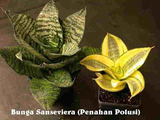Tukang Taman Surabaya Tanaman hias