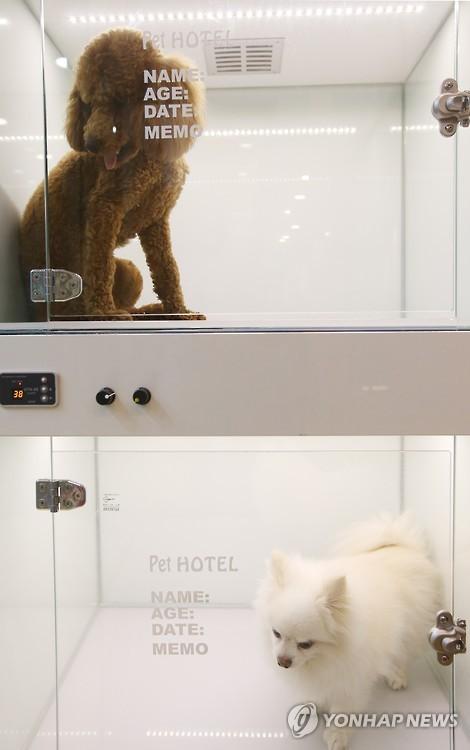 Hotel coreano para perros y mascotas