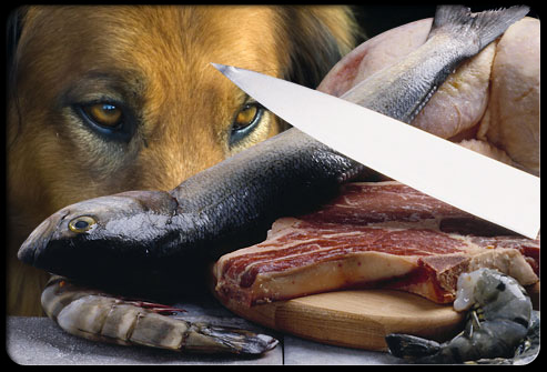 Canine visions cooking for dogs for Raw fish for dogs