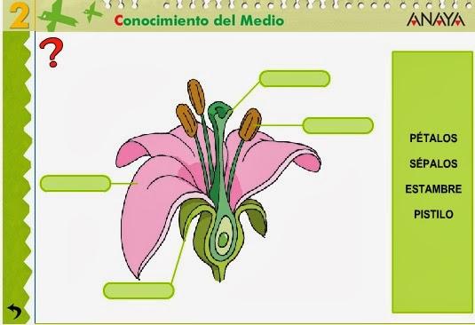 Sabes ar partes da flor?
