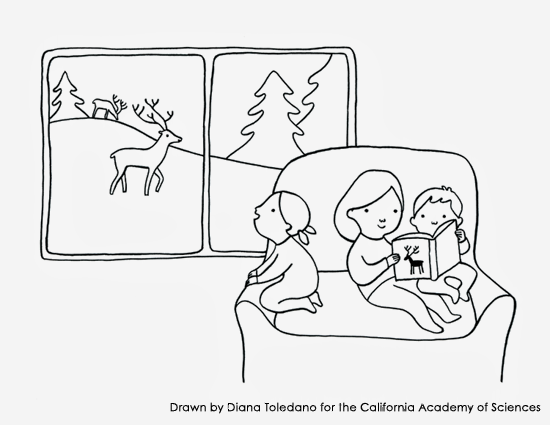 Coloring page with reindeers drawn by Diana Toledano for the California Academy of Sciences