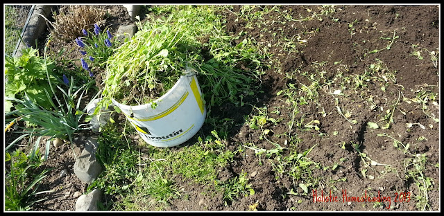 weeding sfg