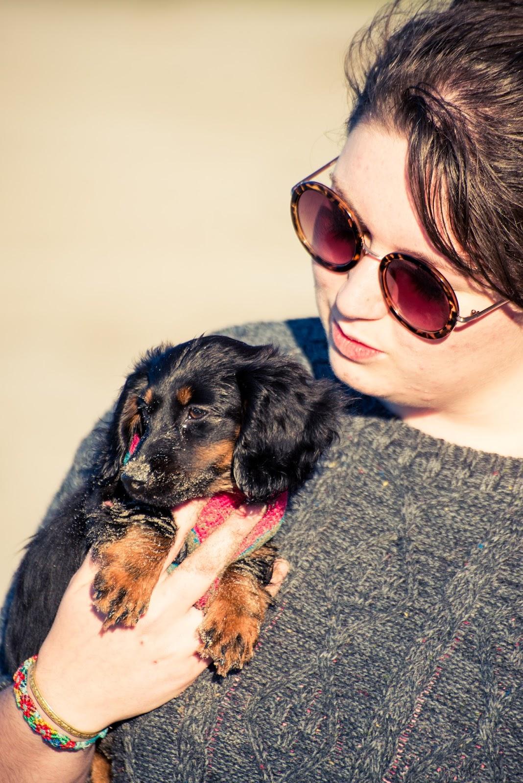 liquidgrain liquid grain hetty miniature dachshund cute blog blogging blogger