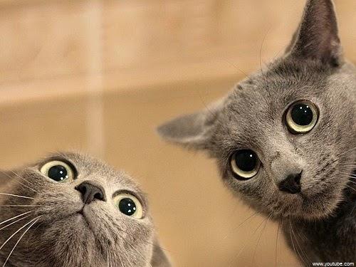 Image deux chats rigolos et marrants