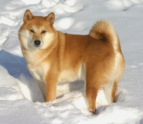 hund porr japansk