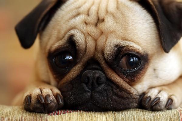 Sad Puppy Dog high resolution widescreen