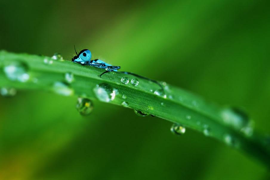 en g%C3%BCzel masa%C3%BCst%C3%BC resimler+%283%29 2012 Yılının En Güzel Masaüstü Resimleri   Jenerik Fotoğraflar
