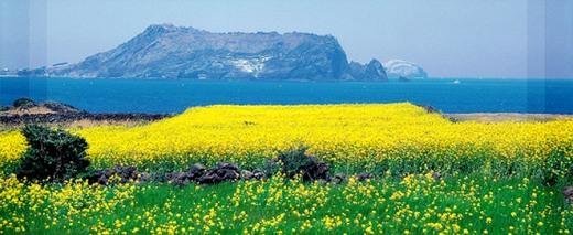 A ilha Jeju - Foto8