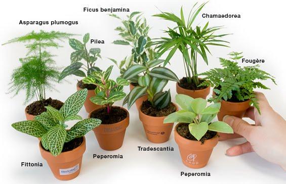 Personne ne m 39 aime plantes d polluantes for Plantes interieurs