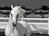 Beyaz At, Güzel Bir At