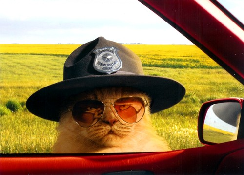 All right meow. Hand over your license and registration Meow
