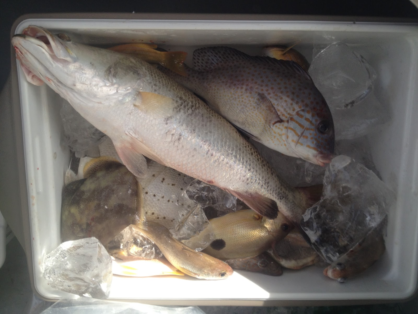 Learn boat fishing in singapore fish were biting before for Where are the fish biting near me