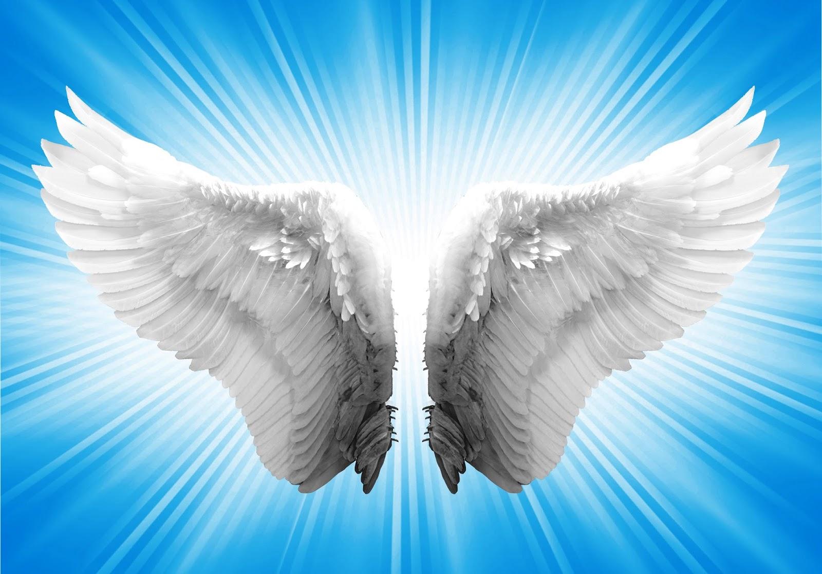 Ala de ángel