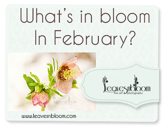 What's in bloom in February