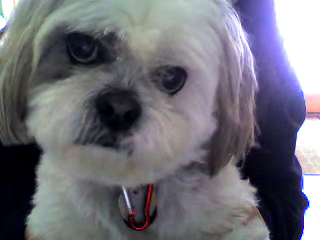 Video+call+snapshot+19 Our furry family members and their gift of unconditional love.......