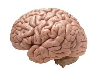 Memory loss, or Amnesia?