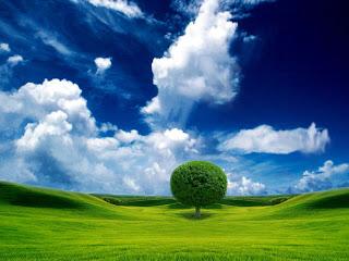 gökyüzü yeşillik ağaç ve manzara resimleri arkaplan
