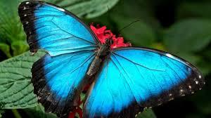daur hidup kupu kupu