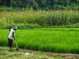 Pertanian Banyuwangi.