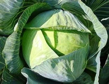 Λάχανο Υγιεινή Διατροφή