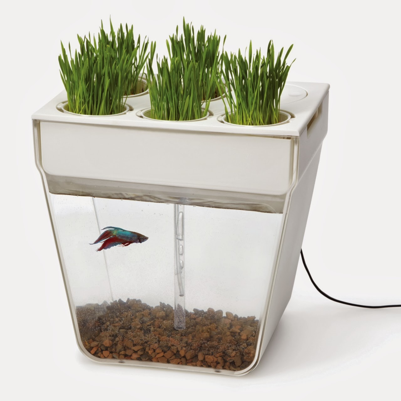 Diy fish tanks joy studio design gallery best design for Betta fish bowl ideas