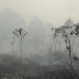 Masih Ada 18 Titik Api di Hutan Lindung Gunung Slamet