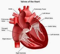 obat penyakit jantung