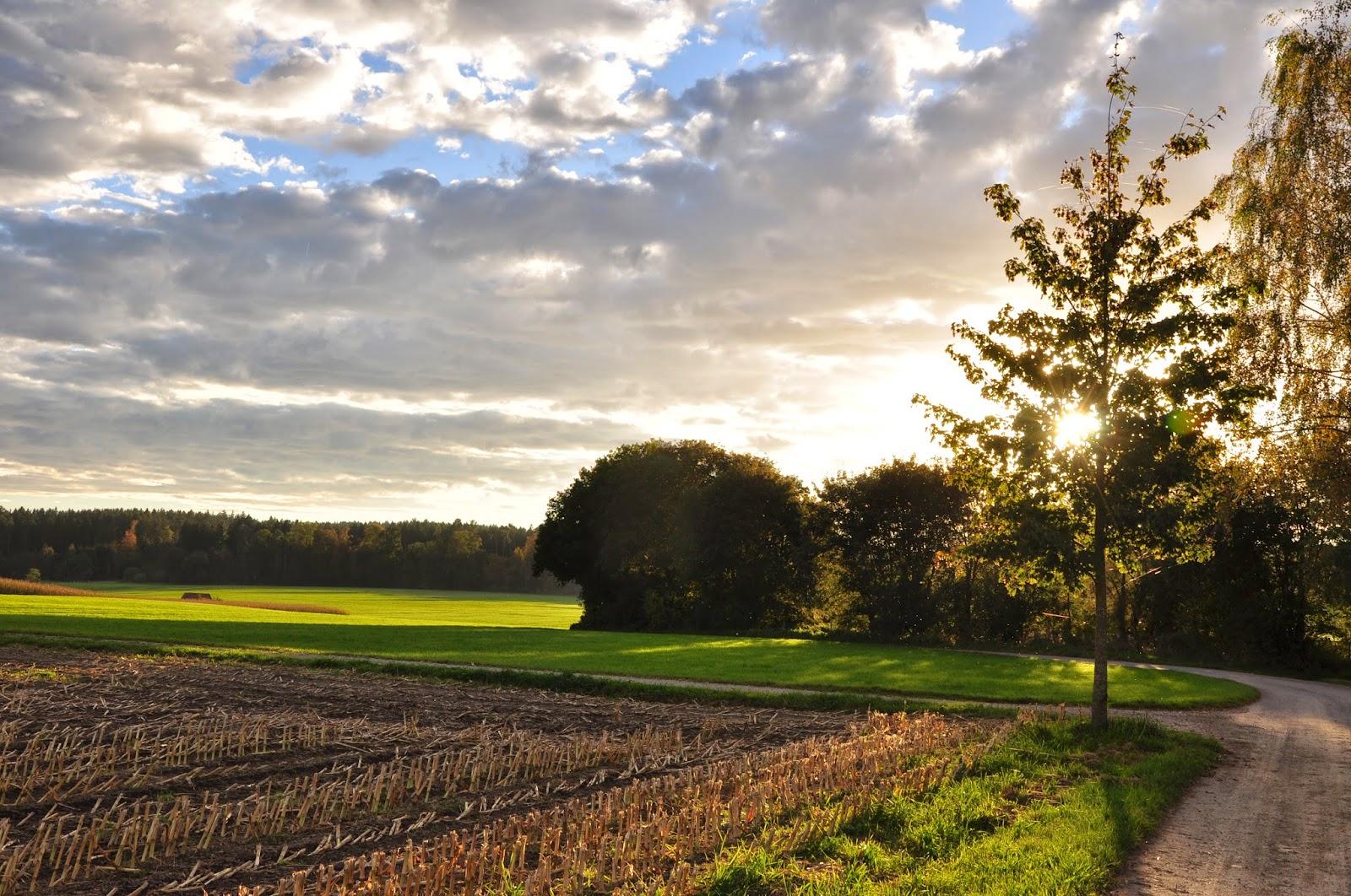 Herbst-Impressionen | Spätsommersonne am Abend